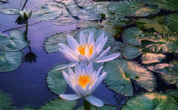 nawozy do roślin wodnych