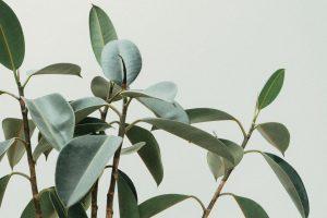 Rośliny kolekcjonerskie dla początkujących i zaawansowanych